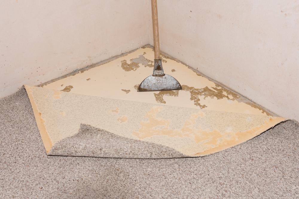 Teppichkleber von estrich entfernen