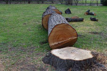 Häufig Baum fällen » Mit diesen Kosten sollten Sie rechnen IV42