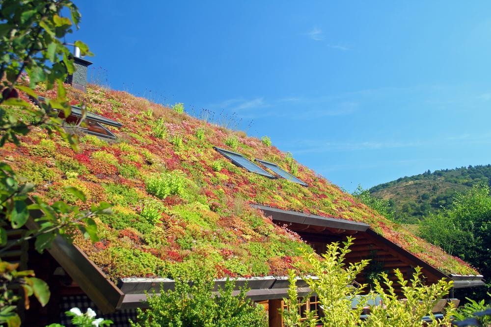 Extensive Dachbegrünung: mit diesen Kosten müssen Sie rechnen