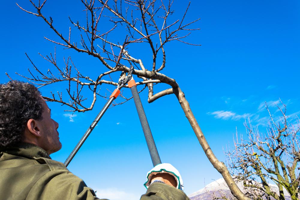 Professioneller Baumschnitt – welche Kosten muss man rechnen?