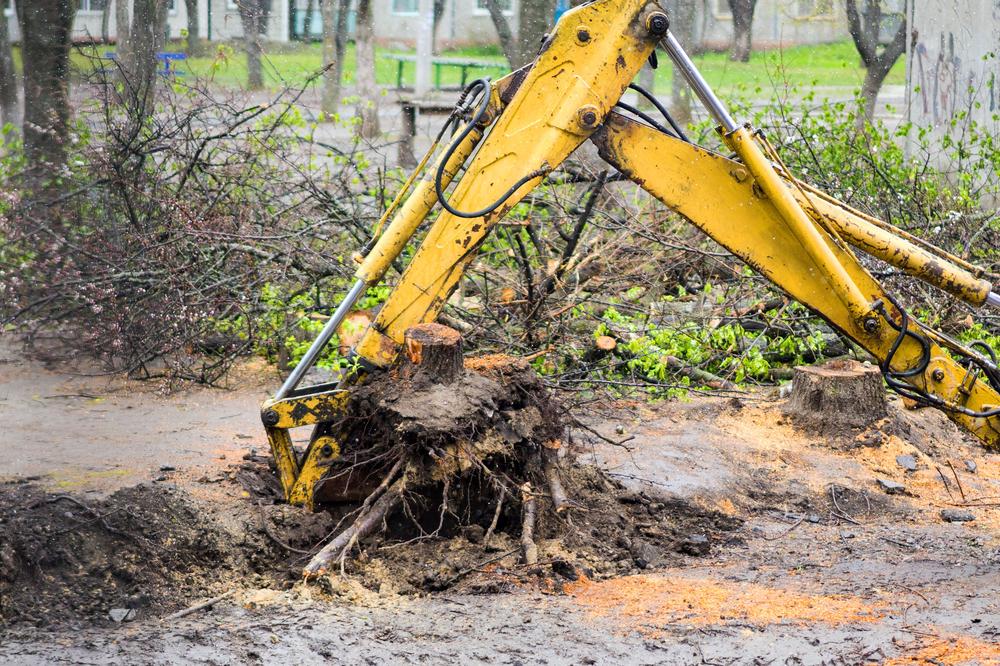 Baumstumpf entfernen – welche Kosten muss man rechnen?