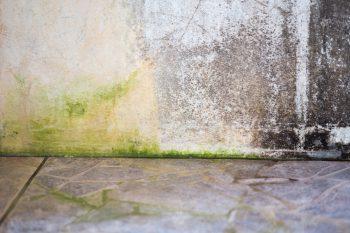 schimmelbeseitigung-kosten