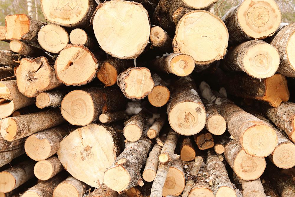 Holz und seine Preise: wie viel ist Holz wert?