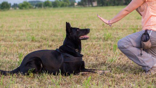 hundefuehrerschein-kosten
