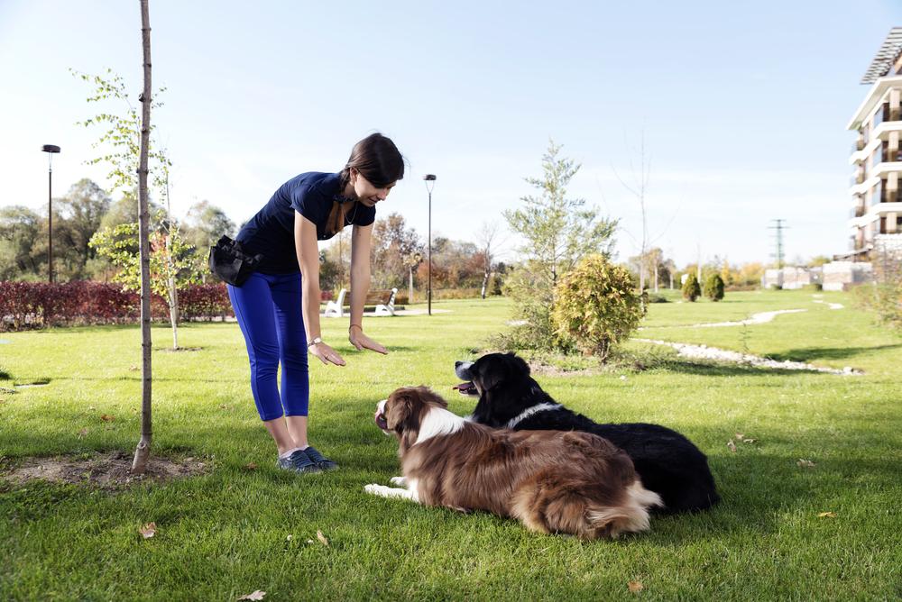 Was kostet es, den Hundeführerschein zu machen?