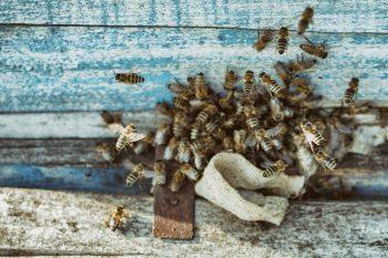 wespennest-entfernen-kosten