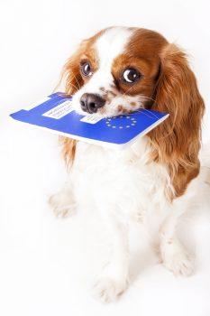 eu-heimtierausweis-kosten