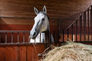 pferd-kosten