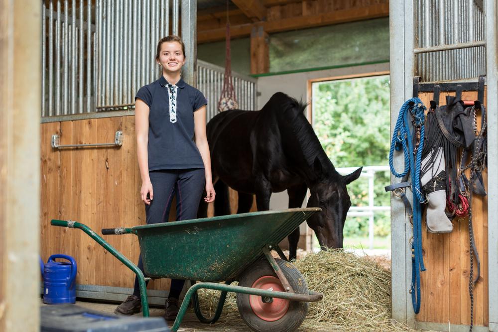 Welche einmaligen und laufenden Kosten verursacht ein Pferd?