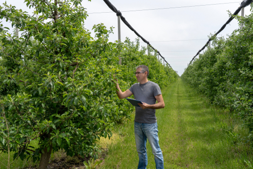 Baumgutachter: Welche Kosten verursacht das?