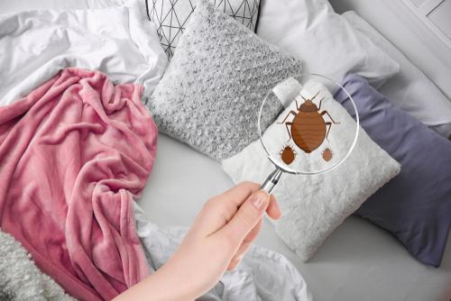 Bettwanzen bekämpfen: welche Kosten verursacht das?