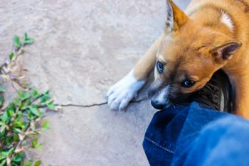 hundeversicherung-kosten