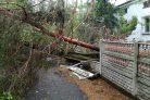 Sturm Baum entsorgen Preise