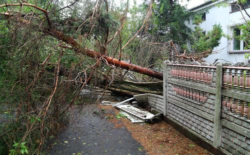 Nach einem Sturmschaden einen Baum entsorgen