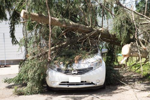 Sturmschaden Kostenfaktoren