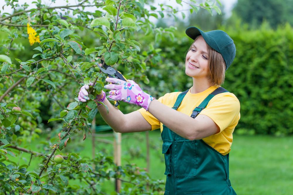 Baumpflege: mit welchen Kosten muss man rechnen?