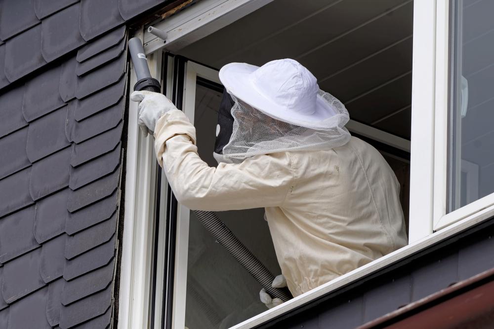 Vom Kammerjäger Wespen entfernen lassen: welche Kosten muss man rechnen?