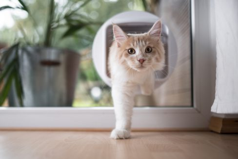 katzenklappe-einbauen-lassen-kosten