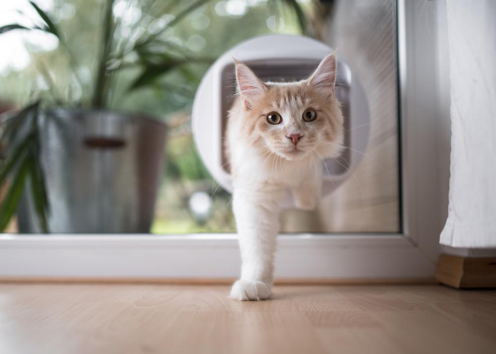 katzenklappe einbauen lassen kostenfaktoren und preisbeispiel