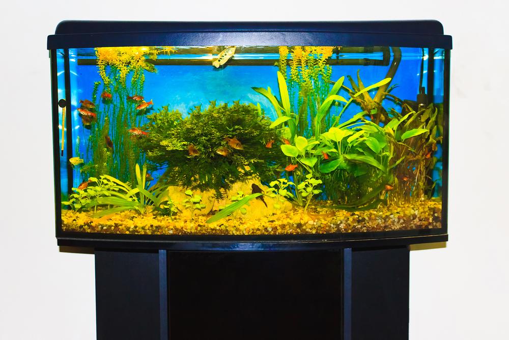 Was kostet ein Aquarium und dessen Unterhalt?