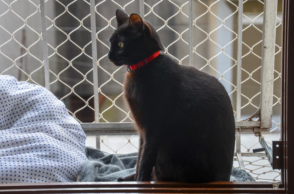Katzennetz anbringen lassen: Welche Kosten fallen an?
