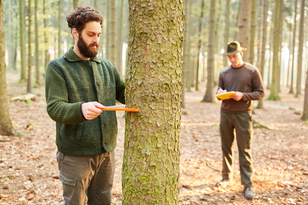 Baumkontrolle: welche Kosten pro Baum muss man rechnen?