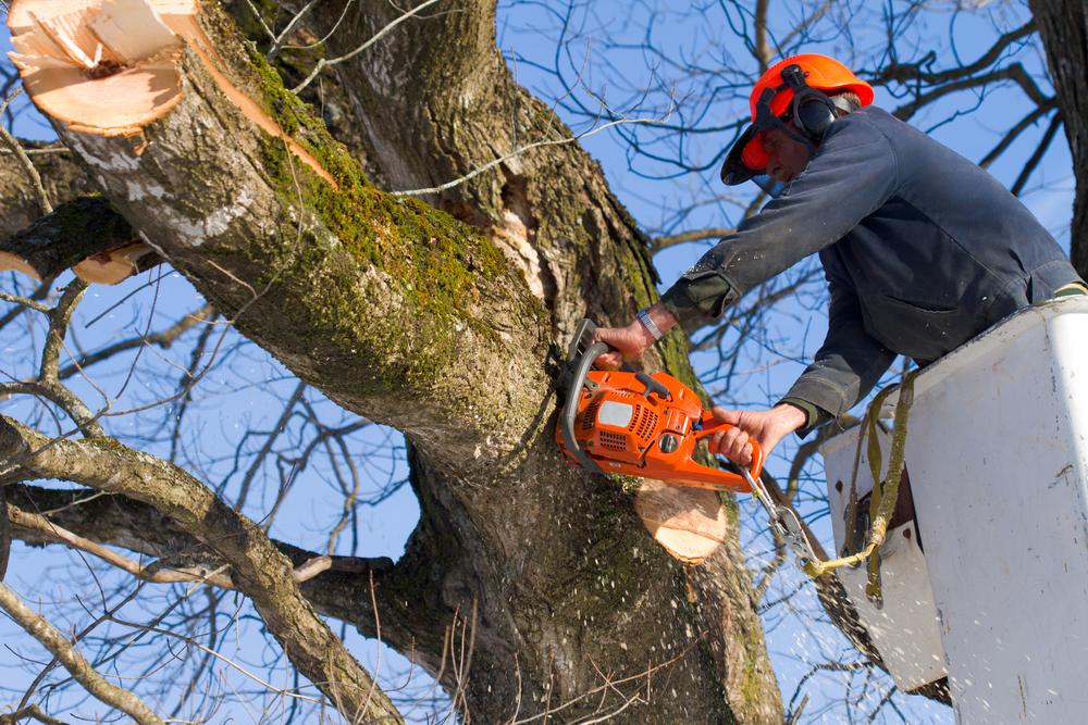 Baumschnitt entsorgen: welche Kosten kann das verursachen?