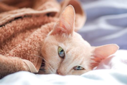 Blasenentzündung Katze Kosten