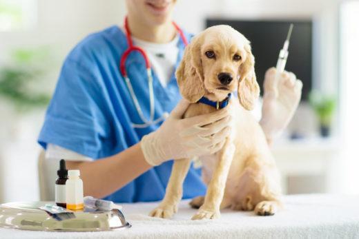 borreliose-impfung-hund-kosten
