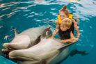 delfintherapie-kosten