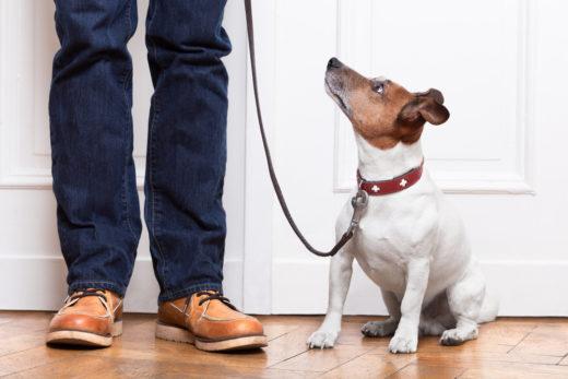 hundehaltung-kosten