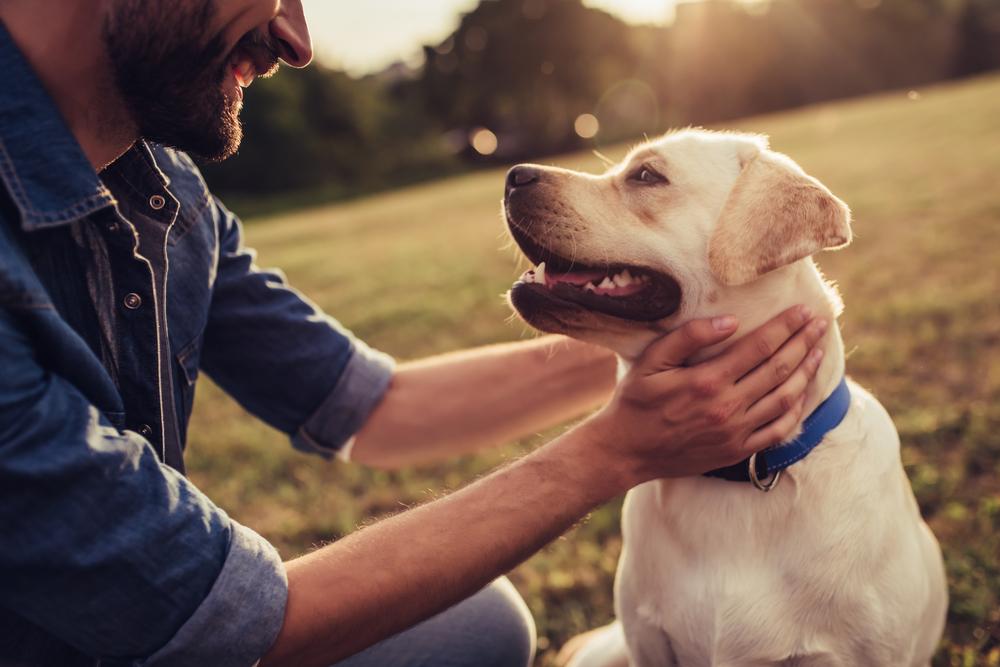 Was kostet es, einen Hund zu halten?