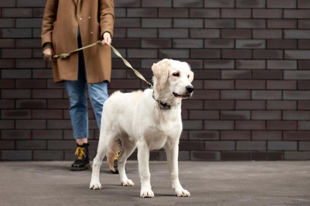 Was kostet der Wesenstest eines Hundes?