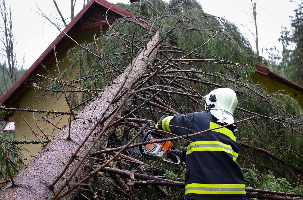 Feuerwehr muss einen Baum fällen: Welche Kosten sind zu erwarten?