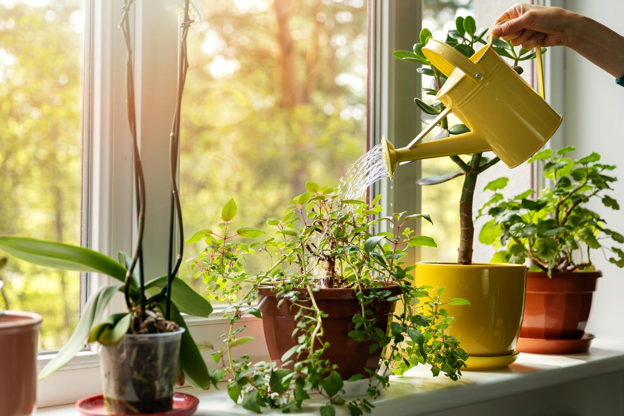 Haushüter: welche Kosten muss man rechnen?