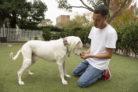 schimmelspuerhund-kosten